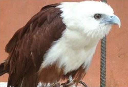 Philippine Eagle Center 【フィリピンイーグルセソター】
